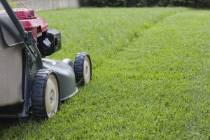 Littleton Lawn Mowing Services
